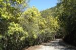 Onderweg april mimosa